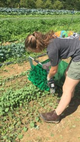 "Students using the lettuce harvester; ""a true innovation in green-harvesting technology!"""