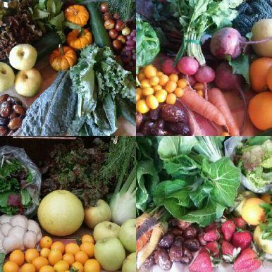 CSA Weekly Produce Box