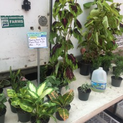 Holl houseplants