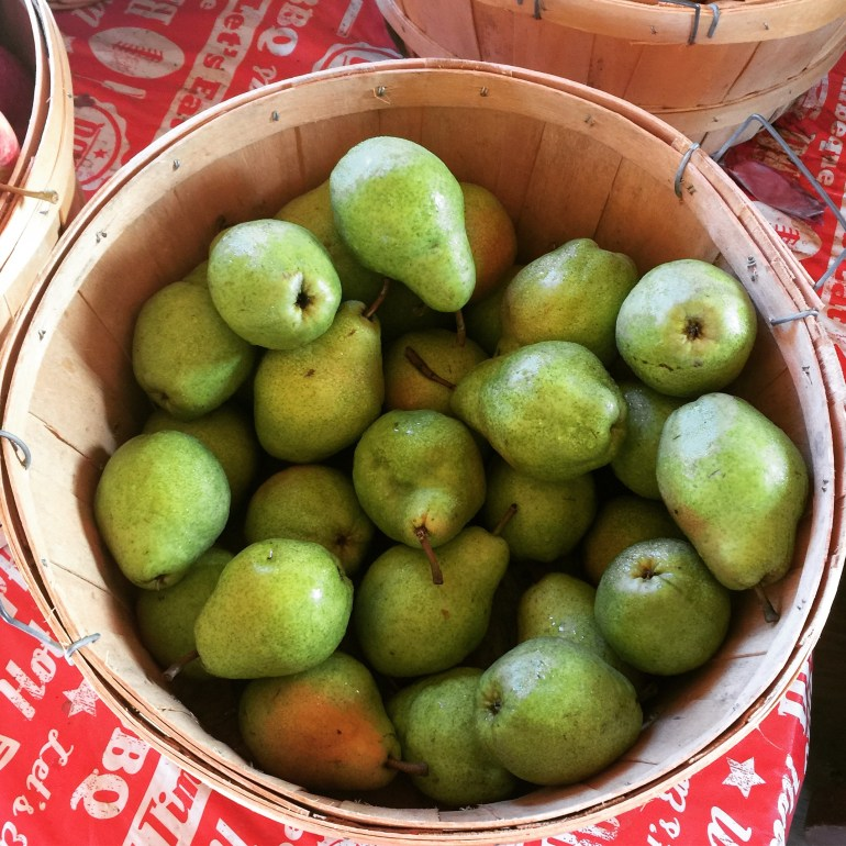 Fresh picked pears in a basket at Treat Farm Orange CT