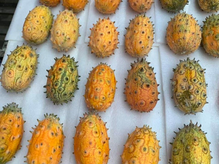 Gorgeous spiked kiwano horned melon displayed at Chinese farmers market stand