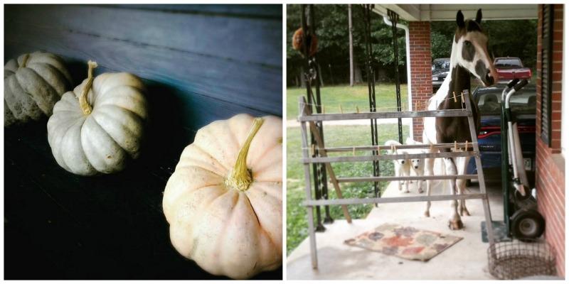 Fazenda de Stillwaters, Henderson, Tennessee |  Farm Stay EUA