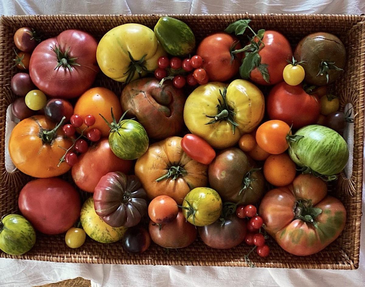 Mixed varieties of heirloom tomatoes on display