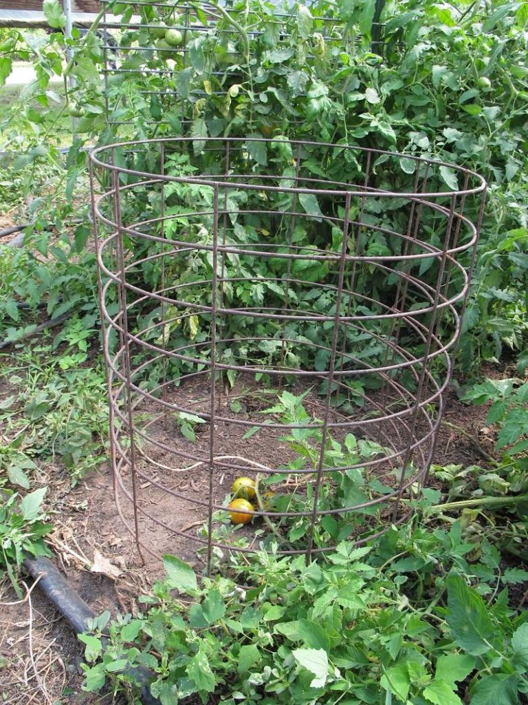 Growing and Supporting Tomato Plants: Cages vs  Staking vs