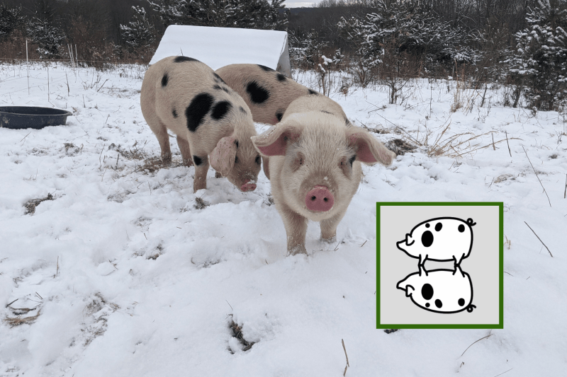 Pasture-raised Pork and Poultry