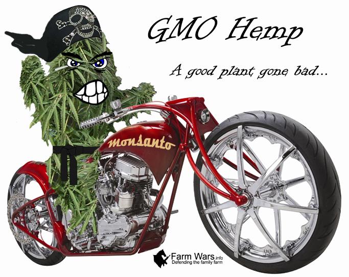 GMO Hemp