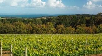 Red Hill Estate. Mornington Peninsula. Victoria. Australia