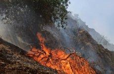 تا این رژیم هست: آتش سوزی مجدد در جنگلهای گچساران