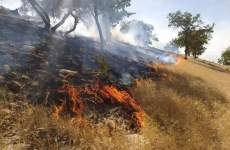 آتش به جان جنگلهای بلوط دنا افتاد