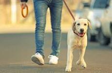 دایناسور رشت: سگگردانی خلاف فرهنگ اسلامی جامعه است