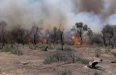 ادامه آتش سوزی در جنگل کرخه خوزستان