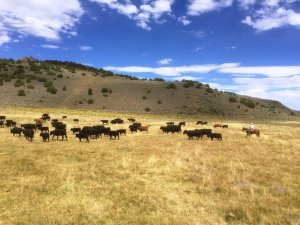 Flying M Ranch property consists of 10,000 non-contiguous deeded acres with BLM grazing permits.