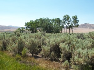 Observation Peak in Lassen County, CA, has meadows and spring water that can support livestock or be leased.