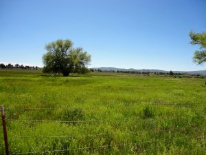 The Spanish Springs Ranch is a great grazing ranch for either year-round cow/calf operation or summer grazing.