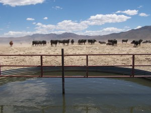 Buena Vista Valley Bulk Land has the opportunity for leasing of winter cattle grazing brings in a minimum of $30,000 per year.