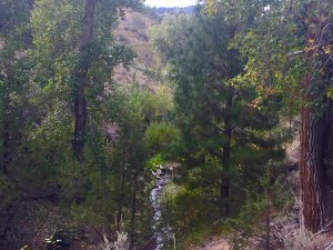 Cherry Creek Nature Retreat is just 3 miles from the quaint historical western town of Cedarville in the Surprise Valley CA.