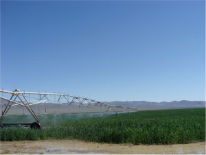 Lucio Hay Farms is a production farm with waters rights an average production of alfalfa between 5.2 and 5.5 tons per acre/year.