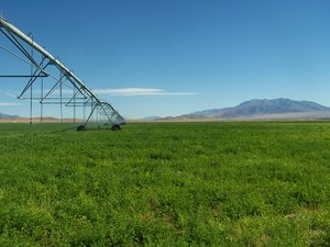 Cosgrave Hay Ranch near Winnemucca NV, a large acreage ranch, a high quality hay farming operation.