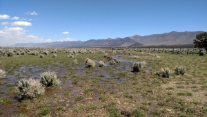 Sheep operation, 80 deeded acre base property located in Diamond Valley with no improvements, operated from the Torre Creek Ranch headquarters.