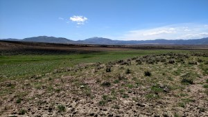 The three ranches together can run approx. 300 head of cattle year round and approximately 2,702 sheep for 6 months