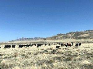 Cattle Operation, 160 deeded acres located 35 miles NE of Austin, NV. 80 acres fenced, 2 - 40 acre parcels in mountains not fenced.
