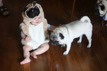Cute baby animal costumes (92)