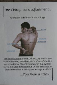 Muscle Neurology