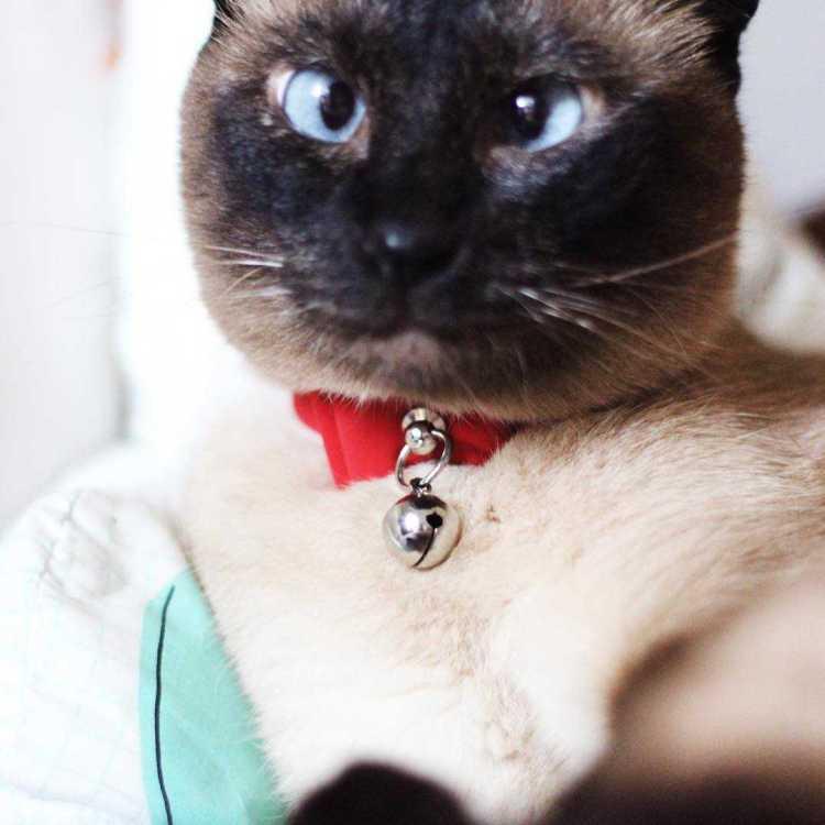 פוסט על מטי החתולה הפוזלת במגזין Fashion tails Luba Shraga לובה שרגא
