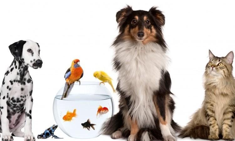 Каких животных можно держать в доме с ребенком