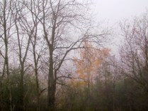 misty fall morning