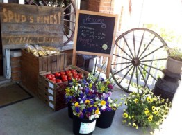 spuds and flowers