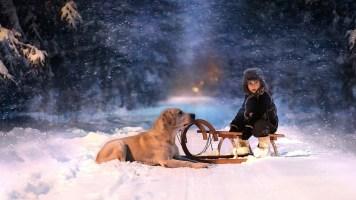winter-trees-snow-snowflakes-sled-child-boy-dog-wallpaper-1920x1080