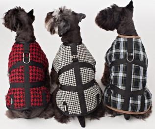 Legitimutt 3 patterned dogs FashionDailyMag loves