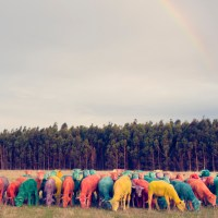 multicolor sheep! Dream series by Gray Malin