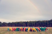Rainbow Sheep I GRAY MALIN dream series FashionDailyMag
