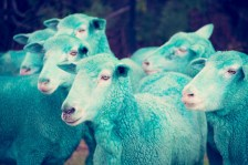 cyan sheep GRAY MALIN dream series FashionDailyMag