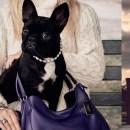 LADY GAGA puppy for COACH