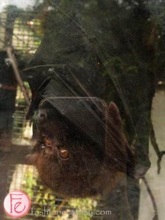 Okinawa World - bat