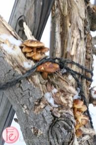 fungus on tree at Lake Toya