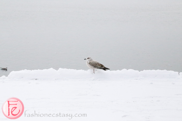 seagull Aker Brygge oslo harbor front