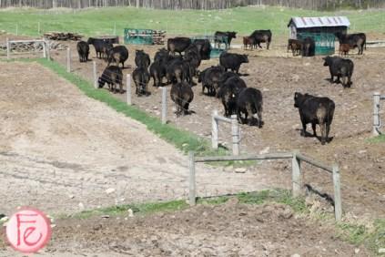 Heatherlea Farm