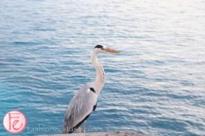 conrad maldives george the grey heron