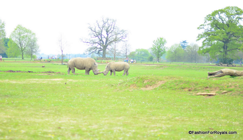 Costwold-Wildlife-Park (1)
