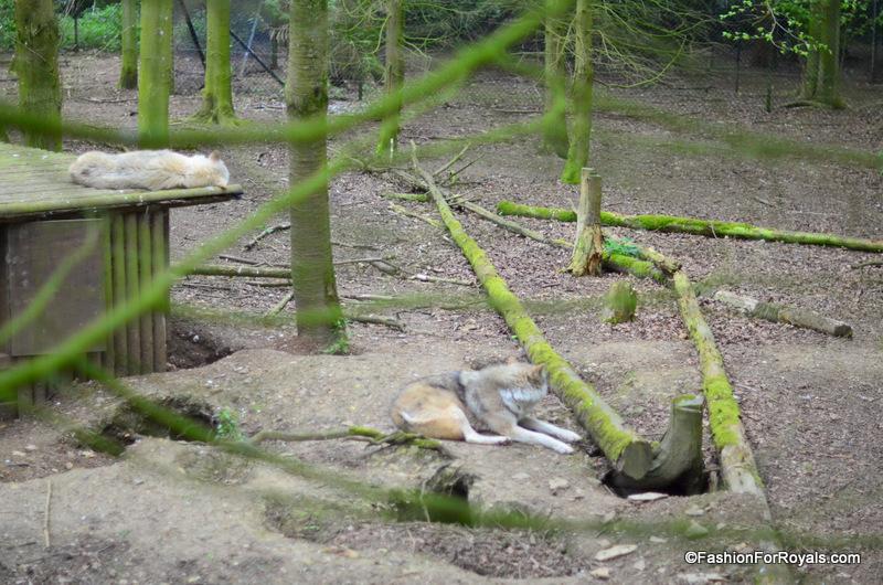 Costwold-Wildlife-Park (11)