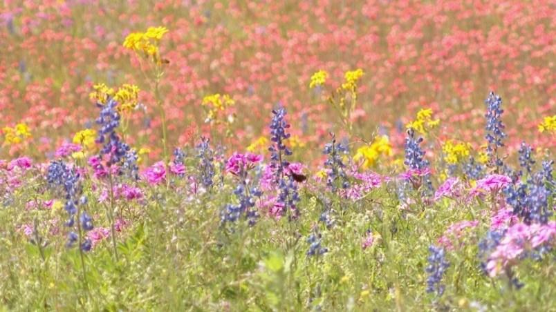 Spring-Summer Perfume