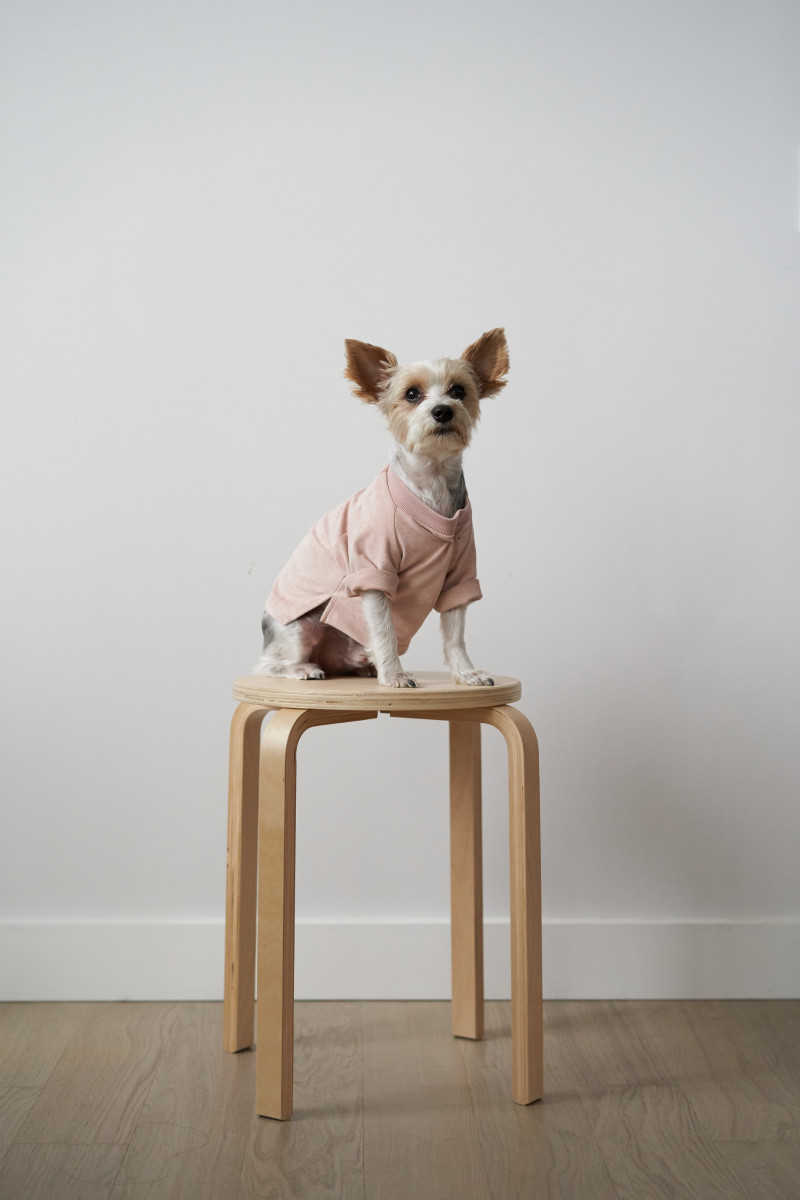 Hemsmith dogwear. Photo: Hemsmith