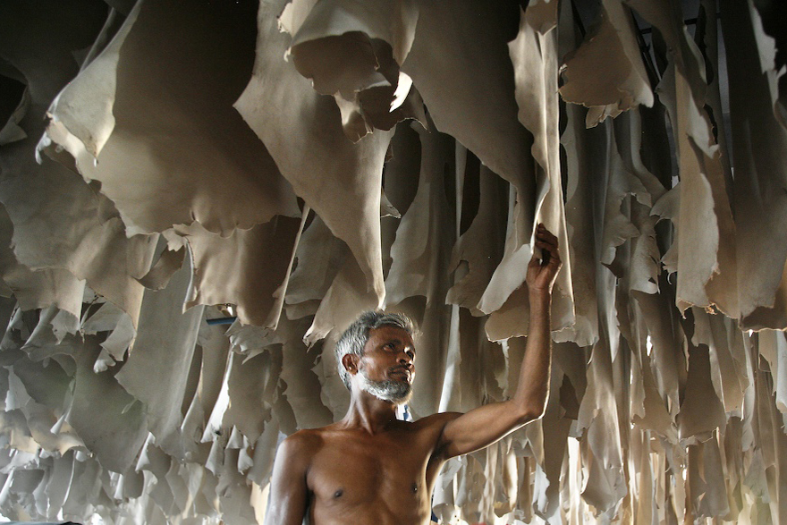 Dhaka, Bangladesh tannery worker inspecting leather production