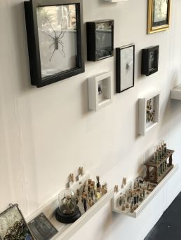 A wide shot of the feature wall at Moth Studios Newcastle, featuring a pinned orb spider and some other bugs, butterflies and broken butterfly wings and some illustrations. - Fashion Voyeur Blog