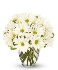 Pushing Daisy Flower Bouquet