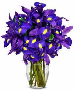 Stunning Blue Iris Bouquet